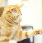 出張 写真 猫